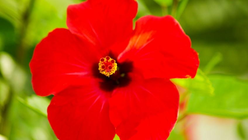 Kwiaty ogrodowe, zdobne. Przykłady i zdjęcia. Kolory ogrodu.