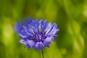 Kwiaty ogrodowe. Przykłady i zdjęcia. Fotografie