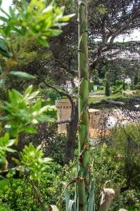 Rośliny do ogrodu. Przykłady ogrodów. Drzewa i krzewy.