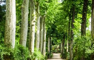 alejki parkowe ogrodowe inspiracje i przykłady