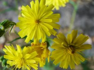 Przykłady i fotografie kwiatów do ogrodu. Żółte kwiaty ogrodowe. Zakładanie ogrodu od podstaw.
