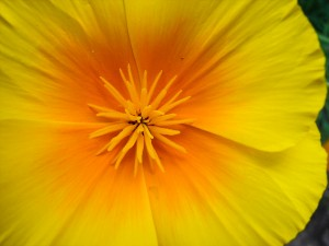 Kwiaty do ogrodu. Przykłady i fotografie. Zakładanie ogrodu od podstaw.