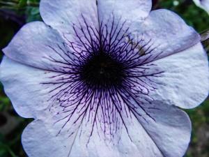 Kwiaty do ogrodu. Przykłady i zdjęcia. Fotografie